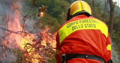 incendio corpo forestale 1515 giorno generico