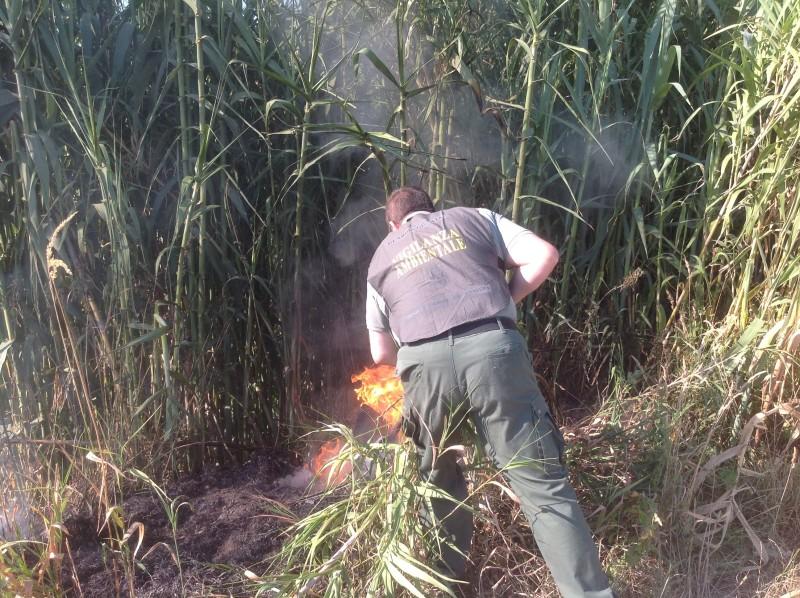 incendio terreno fuoco fiamme sterpaglie wwf caserta giorno generica (2)