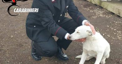 carabinieri cc 112 cane
