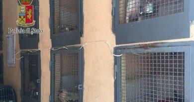 polizia ps 113 cani