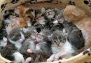 """La denuncia dell'AIDAA: """"Nel 2016, in nove mesi mangiati oltre 5.000 gatti"""""""