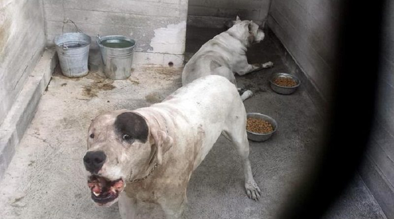 I cani che hanno sbranato il bimbo di 18 mesi nel giardino di casa a Mascalucia. ANSA