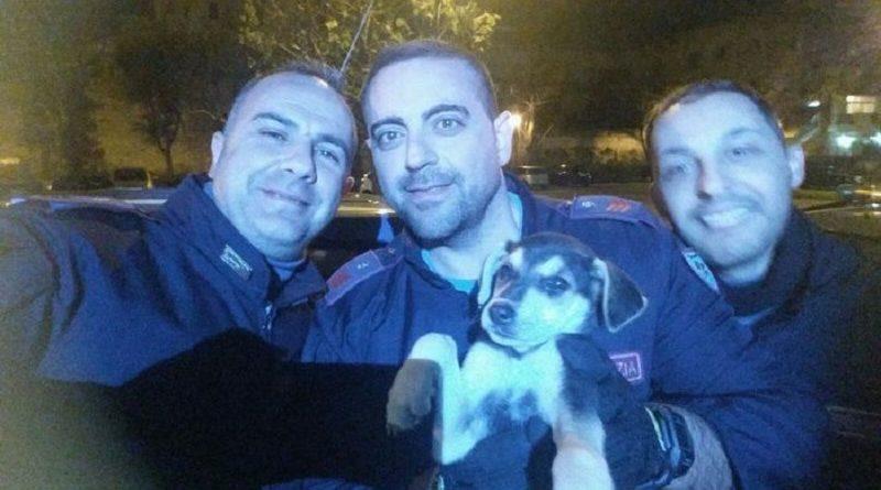 Cucciolo di cane abbandonato in strada salvato dalla Polizia a Napoli. 11.11.2016