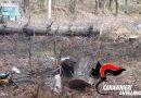 Serino. Sorpreso dai Carabinieri a tagliare nei boschi del Terminio: 66enne nei guai