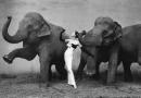 """FOTOGRAFIA"". Richard Avedon – Dovima with Elephants (1955 Art Print)"