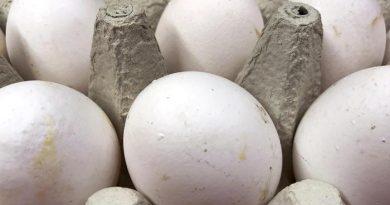 Uova contaminate con Fipronil, Nas di Viterbo e Ancona ne sequestrano oltre 92000