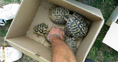 Napoli. Vendeva fauna di specie protette: denunciato venditore